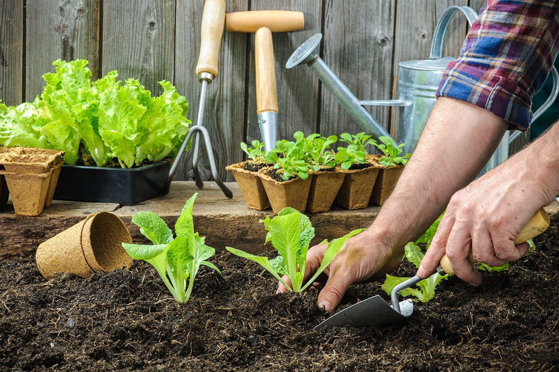 plantation végétaux semis potagers