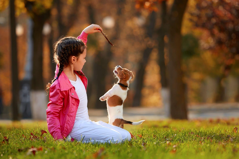 éducation du chien avec récompense