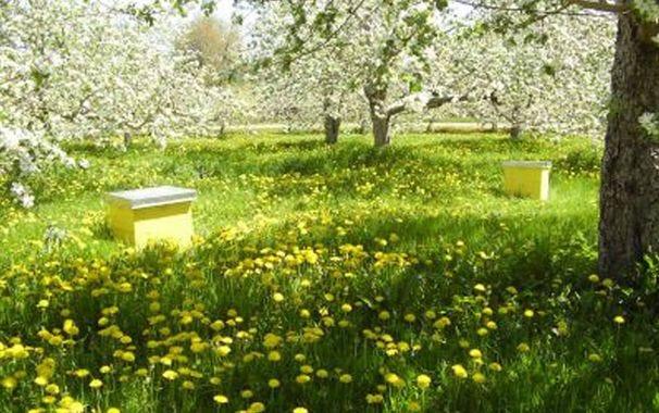 ruche dans les vergers