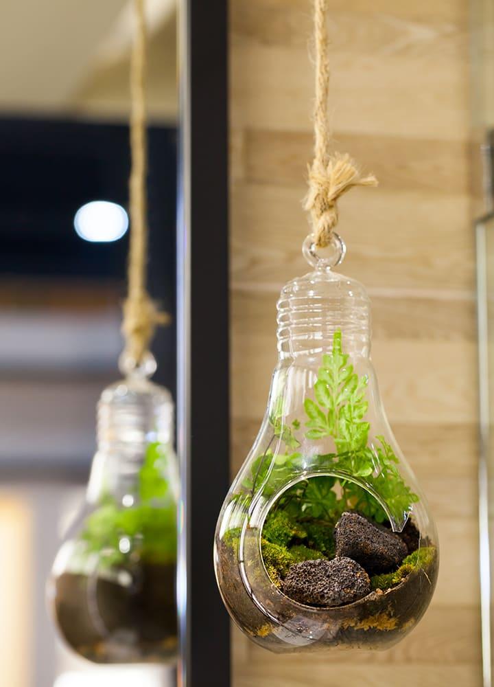 terrarium avec plantes à suspendre
