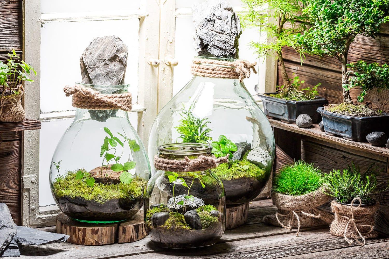 terrariums de plantes décoratifs