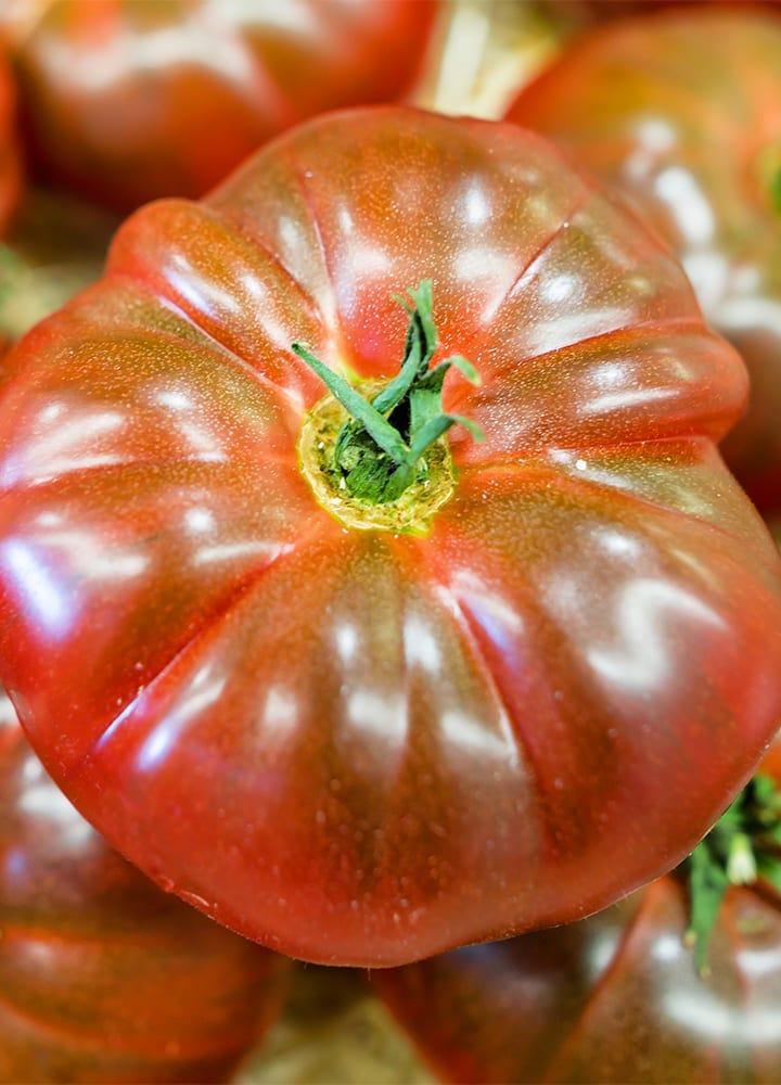 plantation tomate cœur de bœuf pour potager