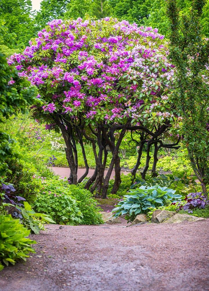 végétaux décoratifs de jardin